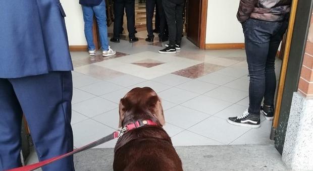Torino, prete non fa entrare in chiesa il cane che piange per il funerale del padrone