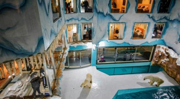 Orsi polari reclusi in hotel a disposizione dei turisti 24 ore su 24: scoppia il caso in Cina