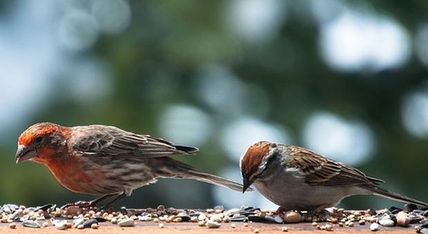 Uccellini incollati sul davanzale per non disturbare i clienti, choc in una pasticceria a Cortina