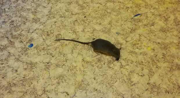 Escrementi di topi nella scuola materna comunale: blitz dei Nas, chiuso l'Istituto