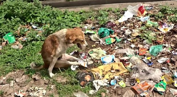 Cane trovato semi-paralizzato e con le zampe legate in mezzo ai rifiuti: salvato, è già tornato a camminare