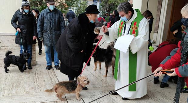 A Roma tra i palazzoni la benedizione degli animali (ma i gatti restano a casa)