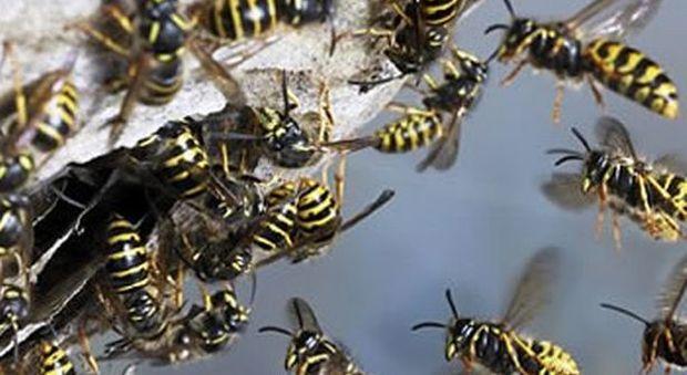 Venezia, agricoltore muore assalito dalle vespe