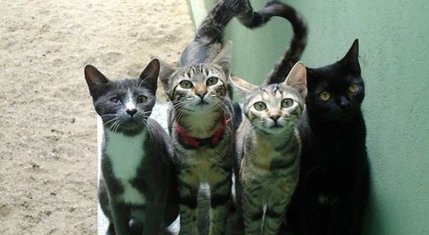 Usa Approvata Legge Contro I Gatti Randagi Uccidono 37 Miliardi