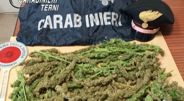 Amelia, controlli e perquisizioni a tappeto. Fermata una coppia con 600 grammi di marijuana.