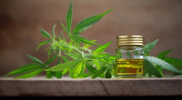 Biscotti alla cannabis, via libera all'uso in molti alimenti: ecco i prodotti consentiti