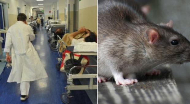 """Modena, topo morto nel pranzo dell'ospedale: non si esclude gesto dei """"no vax"""""""