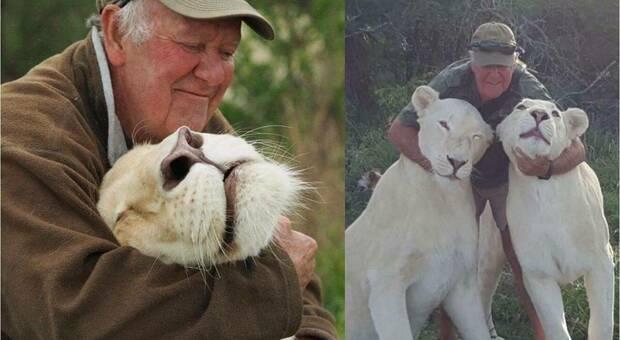 Ucciso dai suoi amati leoni che aveva salvato dalla caccia grossa. Tragedia in Sudafrica