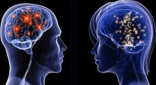 Il cervello femminile invecchia più lentamente è 3 anni più giovane di quello degli uomini