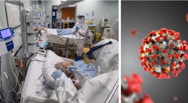 Covid, «così il virus attacca il fegato»: studio (Italia-Usa) dimostrato per la prima volta al mondo