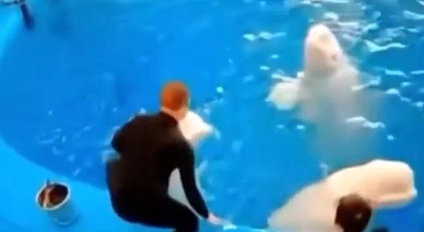 Un frammento del filmato ripresi dalle telecamere del delfinario russo (immag e video pubbl su YouTube da Save the Ocean il 18 maggio '21-allegato link video relativo nella proposta)