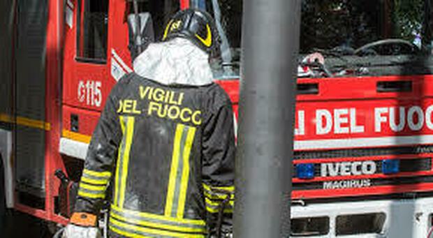 Grosso pino sulla carreggiata, intervengono vigili del fuoco e carabinieri forestali