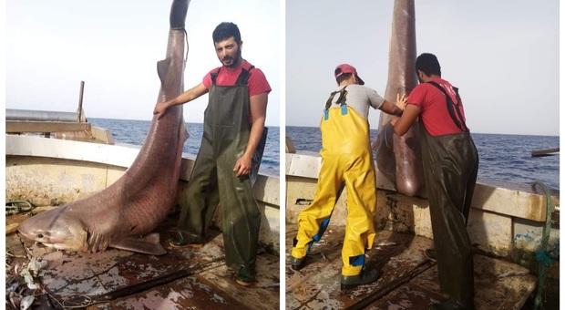 Il grosso squalo pescato accidentalmente, liberato in mare. (Immag pubbl da Sei di Terracina se Su Fb)
