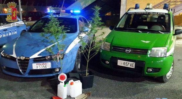 Ostia, due minorenni coltivano marijuana nella pineta delle Acque Rosse