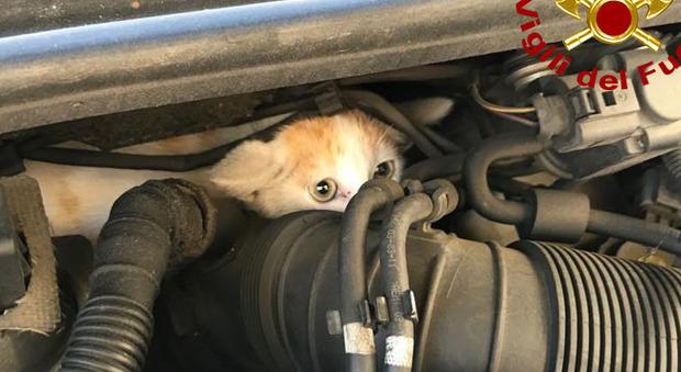 Gattino incastrato nel motore di una Audi, i pompieri smontano l'auto e lo salvano