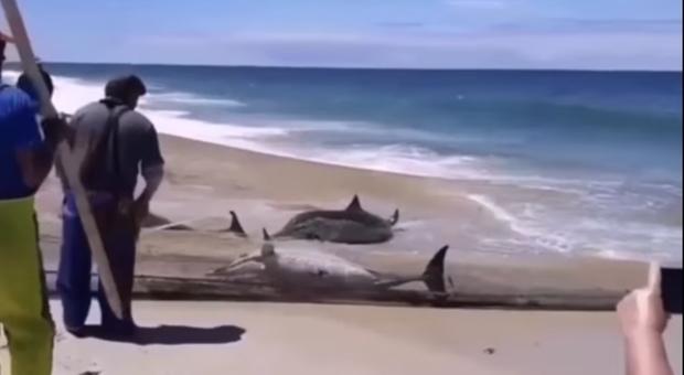 Le reti piene di delfini. (Immagini e video pubblicati da Animal Save Portugal su Fb)