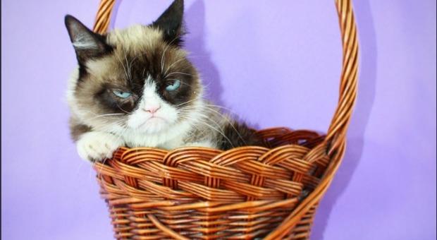 Morto Grumpy Cat Il Gatto Arrabbiato Più Famoso Del Mondo