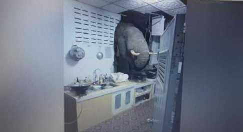 Elefante si schianta nella casa di una donna