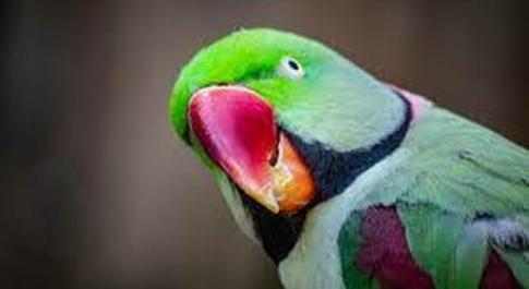 Dorme e scoppia un incendio in casa, il pappagallo lo sveglia chiamandolo e si salvano dalle fiamme