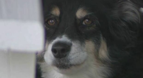Cane Lulu eredita 5 milioni di dollari