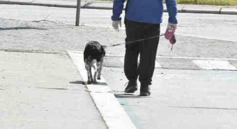Muore in casa, settantenne vegliato dal suo cane per giorni