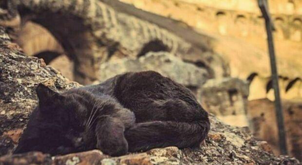 """Colosseo, addio alla gatta Nerina, l'ultima """"pantera"""" dell'arena. Lutto all'Anfiteatro Flavio"""