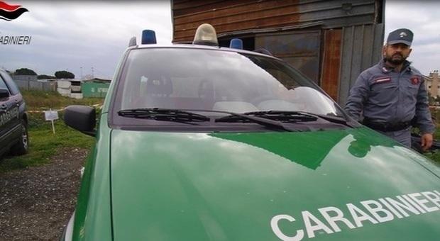 Carabinieri forestali (Archivio)
