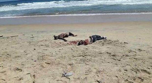 Costa d'Avorio, commando attacca due resort di turisti occidentali: molti morti e feriti