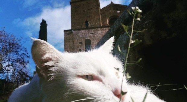 Orvieto, gatto avvelenato muore dopo ore di dolore: