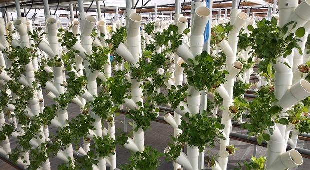 Producono ortaggi senza lavorare la terra, a Fontana Candida l'orto del futuro