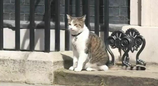 Gran Bretagna, il gatto Larry compie 10 anni a Downing Street: è l'inquilino più longevo