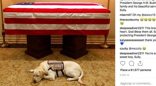 La foto commovente: Sully, il cane che veglia la bara di Bush