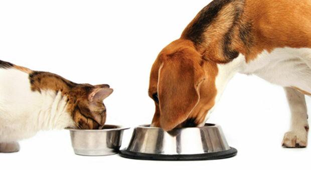 Dieta Barf per cani e gatti: tutto ciò che dovreste sapere sui rischi