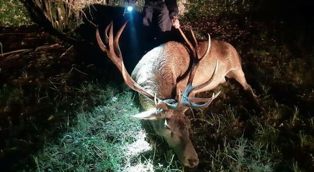 Cervo impigliato al filo spinato: salvataggio estremo