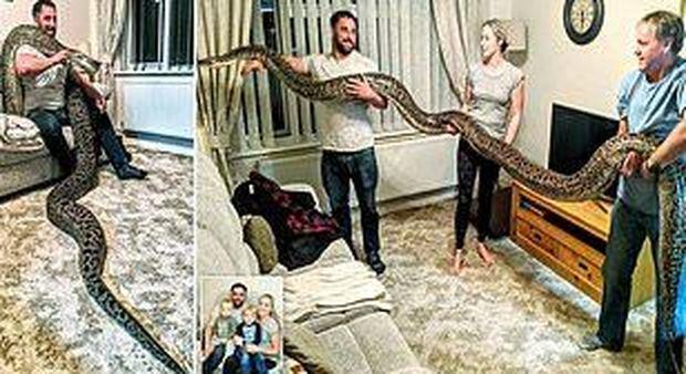 Compra un serpente di 20 centimetri, ma il rettile diventa il più grande pitone birmano al mondo