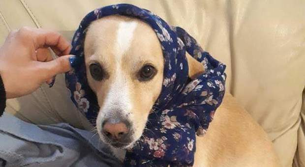 Uccide a fucilate il cagnolino Remì in strada davanti ai passanti: 70enne denunciato