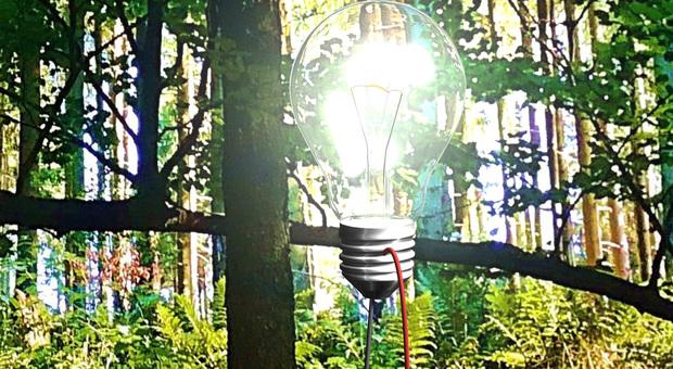 Accendere lampadine a led con una foglia: così le piante generano elettricità