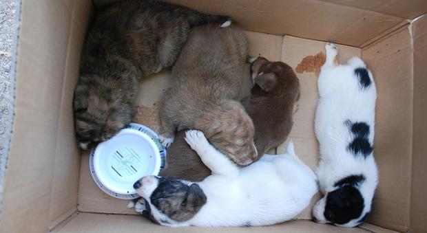 Velletri, i cuccioli abbandonati in un cartone diventano la mascotte della  sfilata canina