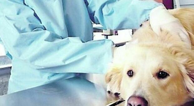 Speranza firma decreto: ok a cura animali con farmaci umani