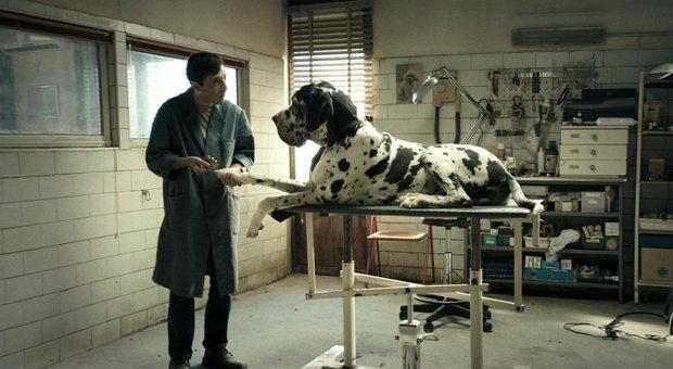 Nastri d'Argento 2018, trionfa Dogman: otto premi per il film di Matteo Garrone