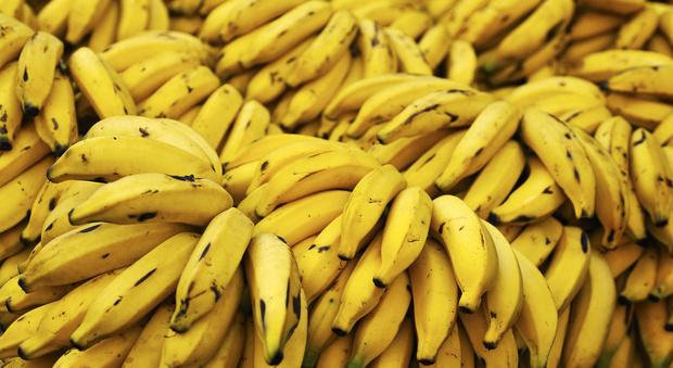 Gb, comprano banane al supermercato: centinaia di ragni velenosi li costringono a lasciare casa