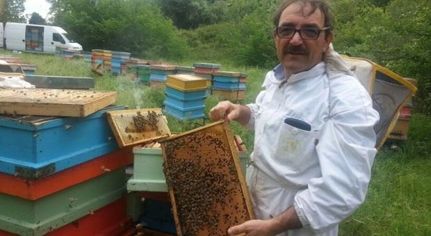 A Tornarecci, per aumentare la qualità di miele e api scatta la transumanza in Puglia