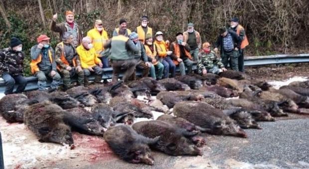 La foto dei cacciatori in posa con i cinghiali che ha scatenato le polemiche (immagini diffuse da Il Quotidiano Piemontese, Prima Biella e altri)
