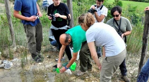 Riserva Navegna e Cervia, la strategia di conservazione dell'ululone appenninico