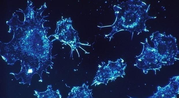 Tumori, allarme oncologi: «Possibile pandemia di contagi, screening in ritardo per il Covid»
