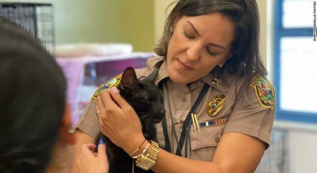 Palazzo crollato a Miami, trovato vivo il gatto Binx: viveva al nono piano, restituito alla sua famiglia