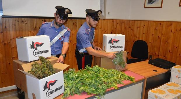 Marijuana in casa, arrestati a Campagnano padre e figlia pusher