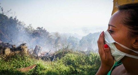 Ciociaria divorata dalle fiamme, a fuoco azienda con un milione di api