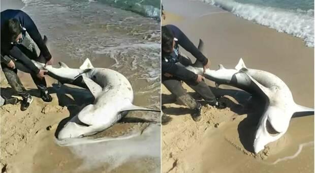 Il grande squalo azzurro lasciato morire invece di essere rimesso in acqua