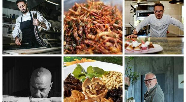 Insetti da mangiare, arriva l'ok dall'Unione europea e gli chef stellati si dividono: intriganti o improponibili?